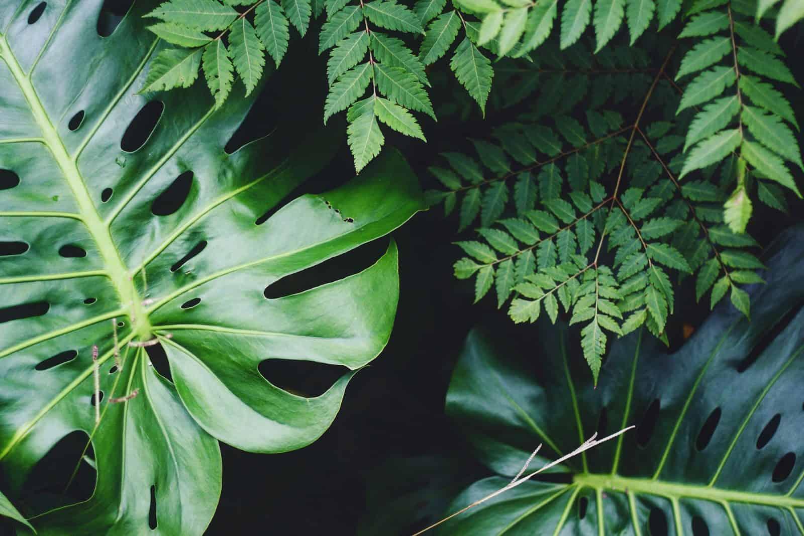 Close up of live green foliage