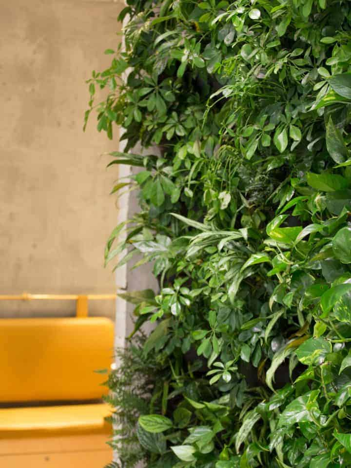HYVERT Living Green Walls