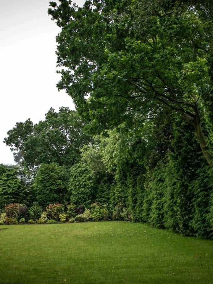 I Want Trees