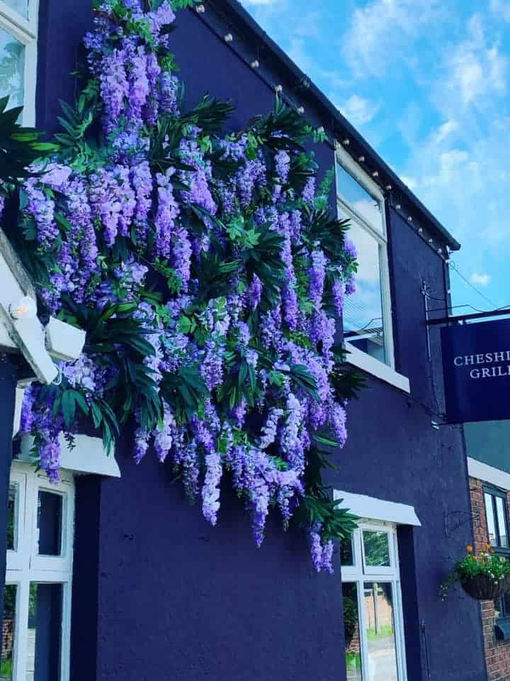 Wisteria Working It's Magic
