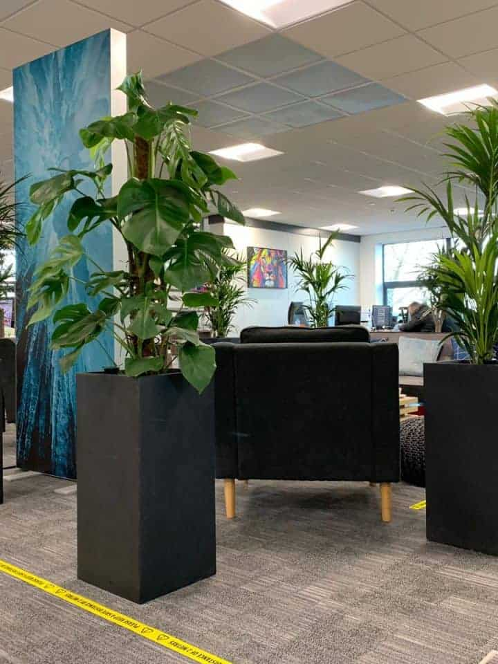 Statuesque Office Plants