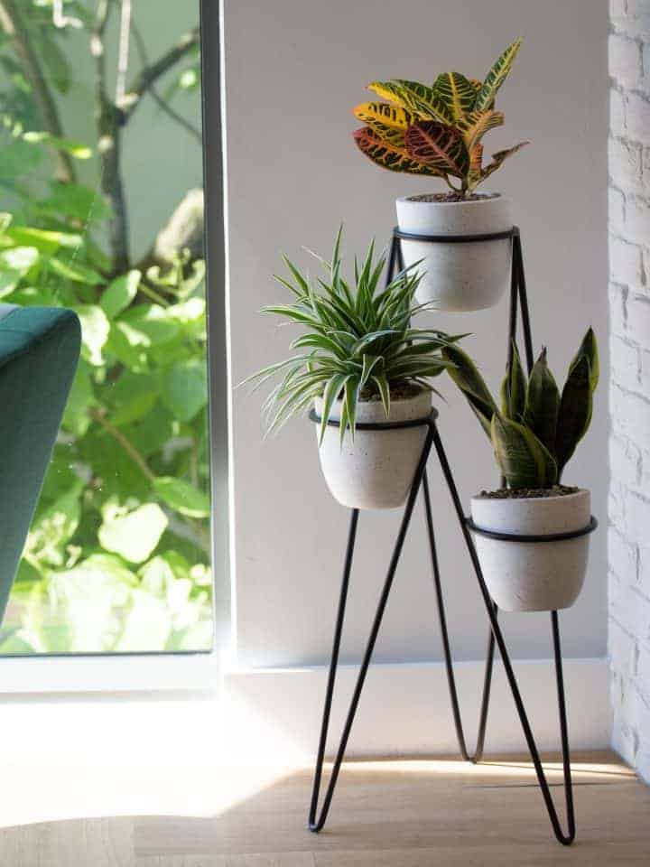 FIVE Reasons you NEED Plants in Your Office
