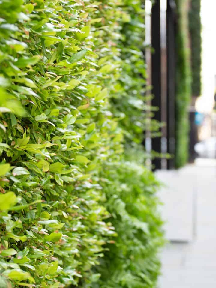 HYVERT – Gloriously Green