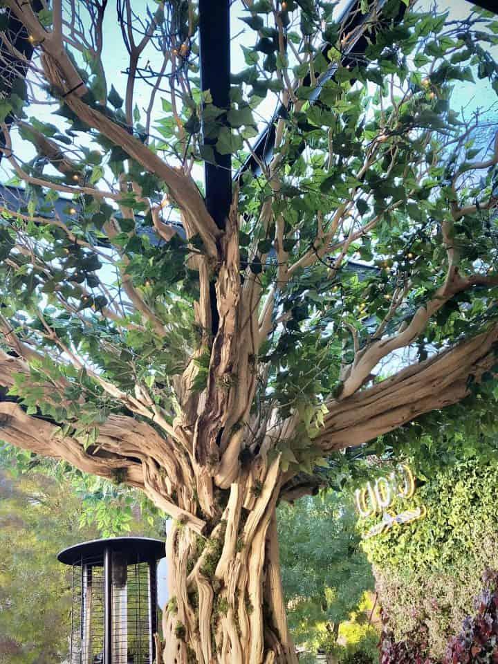 New Tree Takes Root at Cibo